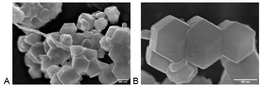 PAN electrospinning fibers modified with nanocrystals, sample coated with 1 nm Au/Pd with sputtering current 1 mA, base vacuum 7x10-7 mbar.