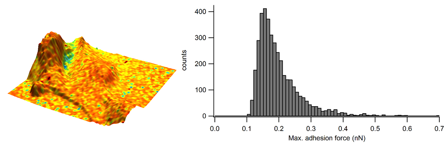 Adhesion overlaid in colour on the 3D representation of the sample height and corresponding adhesion distribution as a histogram.