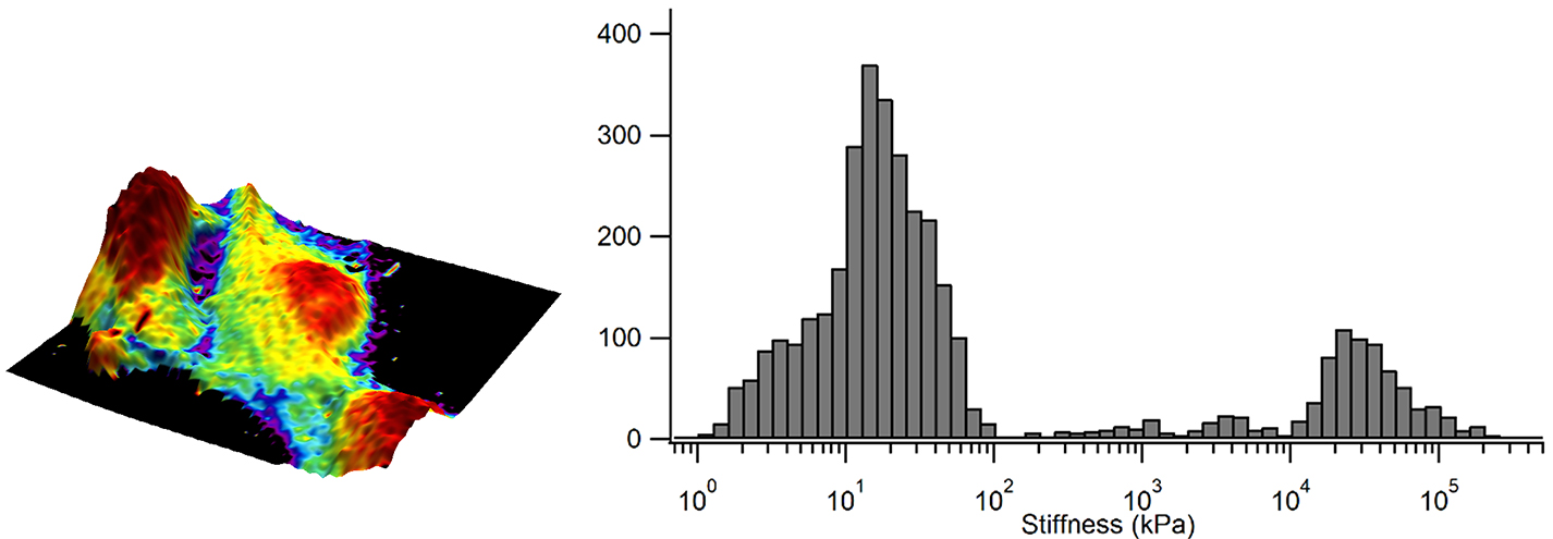 Elastic modulus overlaid in color on the 3D representation of the sample height and corresponding elastic modulus distribution as a histogram.