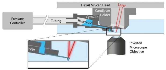 Schematic of AFM with FluidFM®. A hollow cantilever featuring an opening at its free end is filled with liquid from a reservoir. By applying a positive or negative pressure liquid can be secreted out of or aspired into the cantilever to locally manipulate a sample. The AFM handles accurate force control and the complete system is integrated on an inverted, optical microscope to provide optical access to the sample.