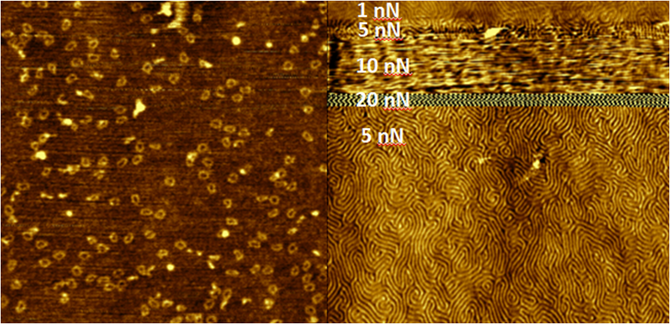 High resolution imaging with Soft IC on (a) 50 nm dna rings and (b) PS/PMMA block copolymer with 38.6 nm spacing.