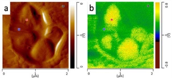 a) AFM height image of nanoscale core domains and (b) AFM-IR image of domains at 1378 cm-1