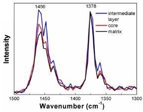 AFM-IR spectra acquired from each region within the HIPP. Data has been normalized to 1378 cm-1