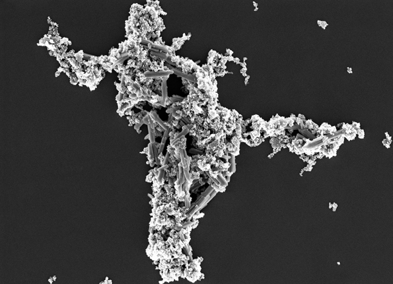 SEM image of the same surface