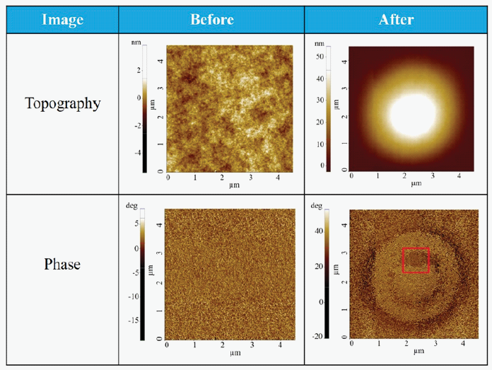 Topography and Phase image before and after heating the sample at 230 °C and applying 1 V DC voltage between the sample and the tip.