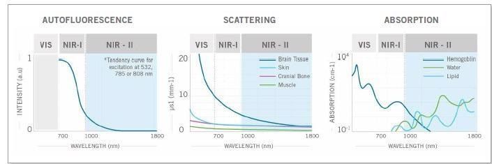 The weaker autofluorescence by the tissues in the NIR-II window contributes to enhancing the signalto- background ratio. The reduced scattering and minimal absorption of emission signals by the tissues helps to improve spatial resolution and depth penetration, which can be up to 10x better