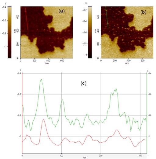 Surface Potential Difference of F14H20 via Sideband KPFM. (a) Surface Potential imaged with probeNSC14/Cr-Au. (b) Surface Potential imaged with probe NSC36C/Cr-Au. (c) Line profiles taken along redline in (a) and green line in (b).