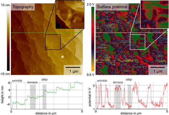 Topography and surface potential captured via sideband KPFM on CVD-grown graphene on a sapphire substrate. The line profiles of the topography in green and the surface potential in red show a correlation of the two signals with a distinct potential contrast between underlying sapphire steps and terraces as well as graphene wrinkles.