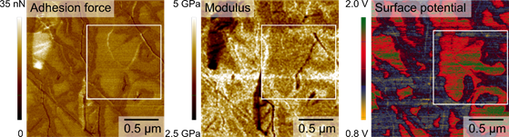 Adhesion force and modulus acquired on graphene on a sapphire substrate via Park Systems' PinPoint nanomechanical mode and the corresponding surface potential imaged via sideband KPFM at the same measurement area. The white box highlights the same sapphire terrace featuring a higher adhesion force, deformation and surface potential compared to surrounding sapphire steps.
