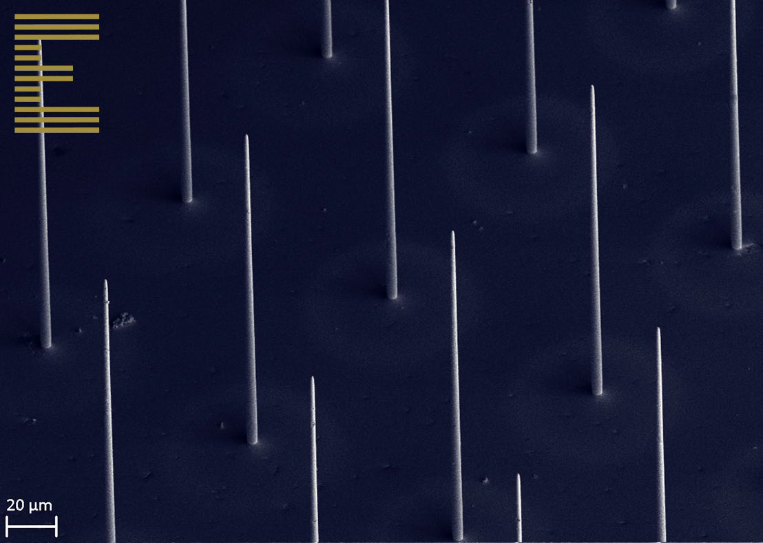 GOLD µAM. An array of pure gold micropillars, produced by additive micromanufacturing.