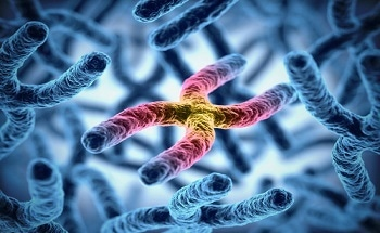Nano-Scale Genomic and Proteomic Analysis in Living Cells
