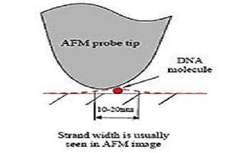 DNA Base Materials for Nanotechnology and Nano Sized Devices