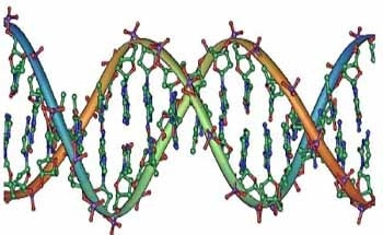 DNA Imaging with High Accuracy Using FlexAFM