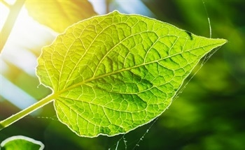 Planetary Nanomedicine: Does the World Need a Global Artificial Photosynthesis Project?