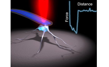 10x Faster Single Cell Force Spectroscopy with Your AFM