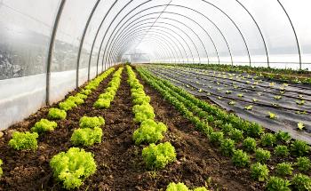 How can Nanotechnology Help Mitigate Environmental Stress on Crop Plants?