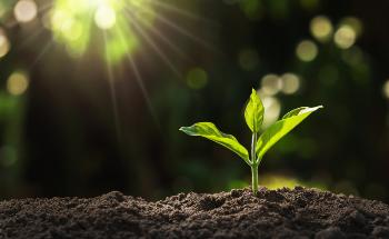 What is a Nanobionic Light-Emitting Plant?