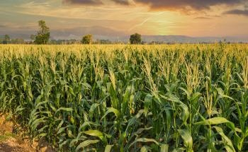 The Effect of Nano-Fertilizers on Sustainable Crop Development