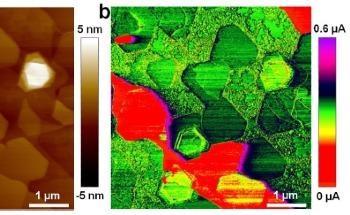 Electrical Characterization of 2D Transition Metal Dichalcogenides via SPM