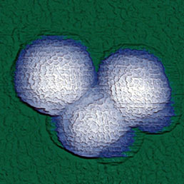 200 × 200 × 100 nm high-resolution AFM topography of rhinovirus particles.