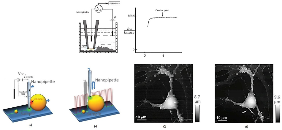 "(a) Illustration of a scanning nanopipette probe operating in continuous scan mode colliding with a spherical object possessing a steep vertical slope. (b) Illustration of the hopping mode used in HPICM showing how the pipette is withdrawn to a position well above the sample before approaching the surface. (c,d) Topographical images of the same fixed hippocampal neuron obtained first with hopping mode (d) and then with continuous left-to-right raster scan mode (c), using the same nanopipette. Hopping mode algorithm applied to SICM allows to image uneven and convoluted samples at high resolution ensuring that pipette always approaches from above rather than ""dragging"" along the surface."