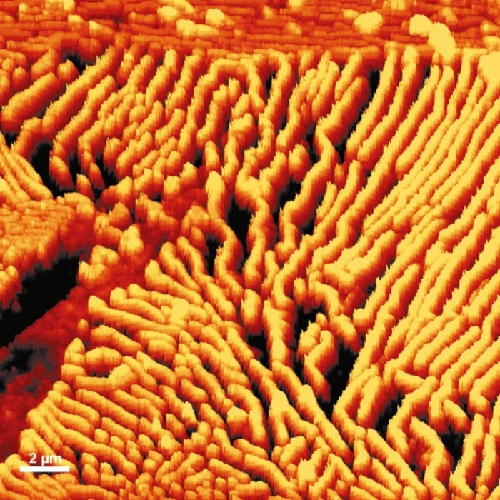 AFM topography image of a steel surface.