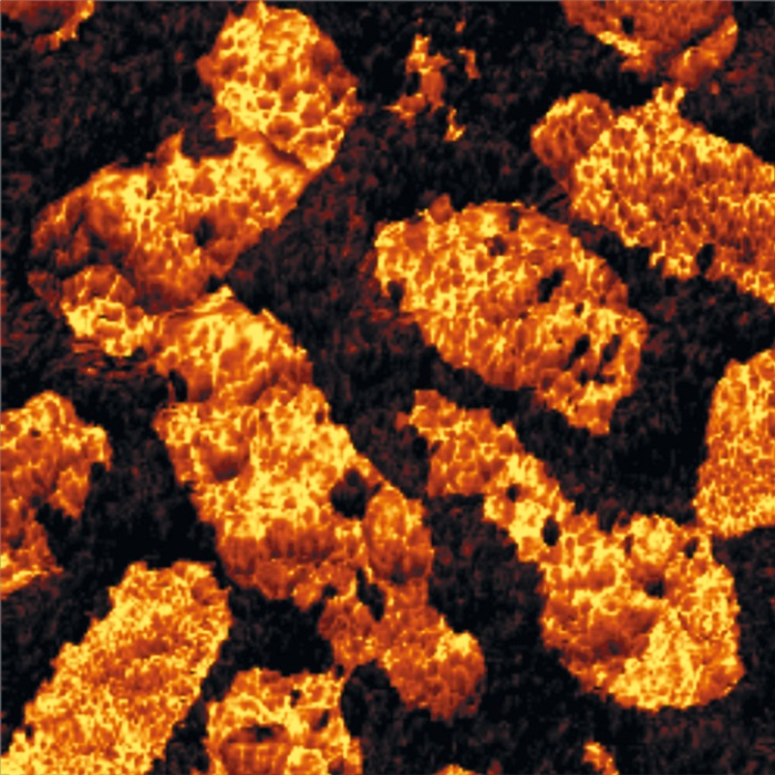 Digital Pulsed Force Mode image of fossilized bacteria.