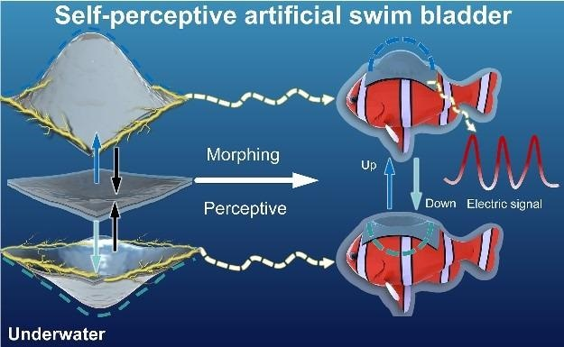 The self-perspective artificial swim bladder perceives the ambient environment.