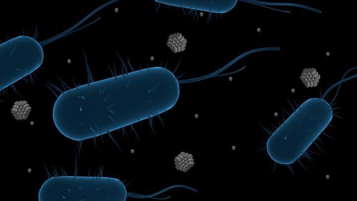 Study Analyzes Mechanisms Behind Bacterial Resistance to Ag Nanoparticles.