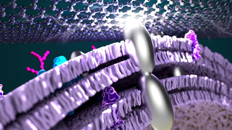 Silver Nanoparticles Enhance Efficiency of Microbial-Based Fuel Cells