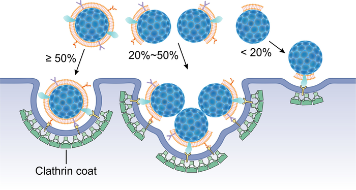 Fluorescence Quenching Assay to Probe the Integrity of Cell Membrane Coating.
