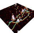 Seamless Integration of Light Microscopy and AFM Images