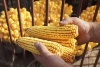 Scientists to Study the Impact of Nanoparticles on Food Crops