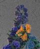 New Electron Microscopy Study Helps Understand Replication Mechanism of Flu Viruses