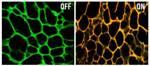 Novel Nanodevice Blocks Drug-Resistant Genes and Then Releases Cancer Drugs