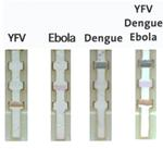 Colored Nanoparticles Distinguish Between Yellow Fever Virus, Ebola and Dengue in Paper-Based Test