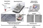 New Method for Rapid Neutrophil Chemotaxis Test Using Microfluidic System