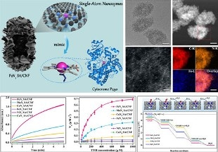 New Class of Single-Atom Nanozymes Shows Great Promise as the Next-Generation Nanozymes