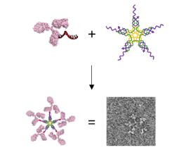 A Novel Method to Design Large Multi-Antibody-Like Nanostructures Using DNA Nanotechnology