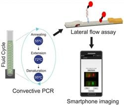 Quantum Dots and Smartphone can be Used to Detect Deadly Bacteria