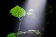 Study Demonstrate Pathway of Uptake, Transport of Nanoplastics in Plant Root