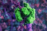 Nanoparticle Vaccine Technology Could Offer Protection from Different Coronaviruses
