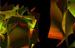 Shedding New Light on Superconductivity