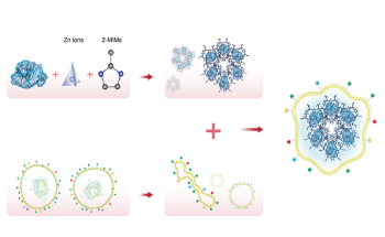 Metal-Organic Framework Helps Achieve Better Results for Cancer Immunotherapy