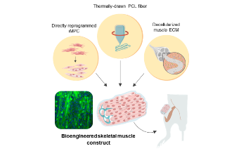 Direct Cell Reprogramming Technology Shows Promise for Regenerative Medicine