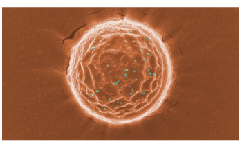 """New """"Nanotraps"""" Could Capture and Destroy Coronavirus Within the Body"""