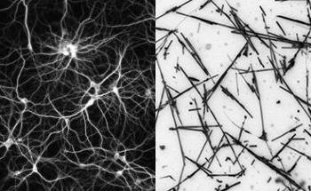 Artificial Network of Nanowires can be Tuned to Respond Like the Brain