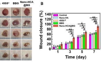 Nano-Scale Borate Bioactive Glass Reduces Biological Toxicity of Borate Bioglass