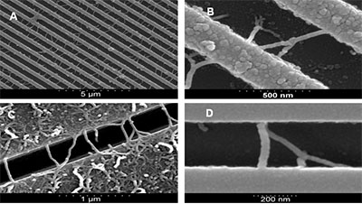 SEM images of: A) trench patterned Si, with stamped 0.1% catalyst solution. MWNTs grown under CVD conditions: 800°C; 0.5 slm of Ar; 0.05 slm C2H2 for 60 minutes. Resulting in ~ 0.6 interconnects per µm of trench length with 18% branch structures and B – D) selection SEM images of straight and branch structure interconnects grown under various CVD conditions.