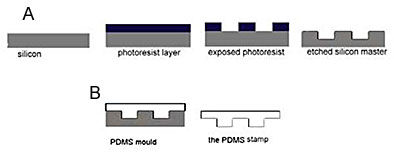 (a): Schematic of patterning a silicon master using traditional photolithography. (b): Schematic of casting an elastomer stamp from a silicon master. The stamp can then be used for soft lithography patterning. Many stamps can be cast from the same master.